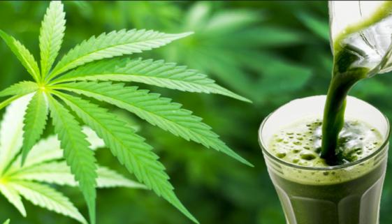 raw-cannabis-juice-benefits